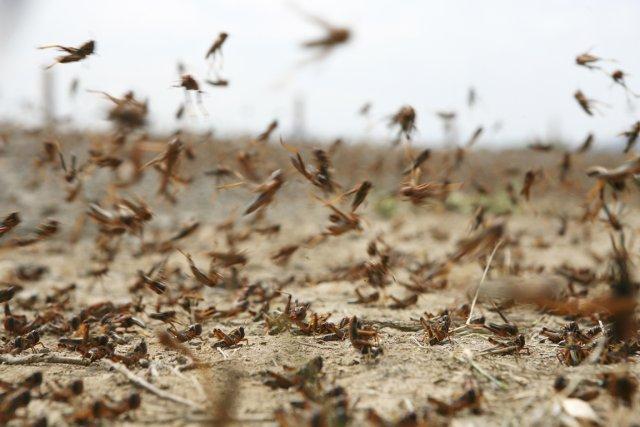 Depuis la naissance de l'agriculture, les invasions de... (Photo Digital Vision/Thinkstock)
