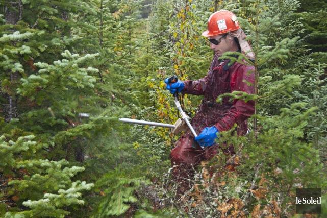 Les ingénieurs forestiers déplorent que Québec injecte chaque... (Photothèque Le Soleil)