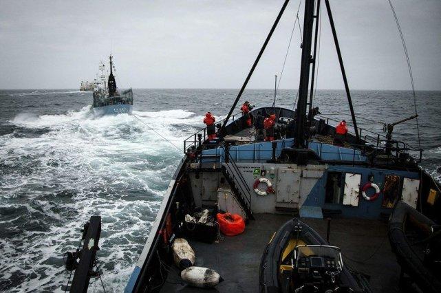 Selon Sea Shepherd, les Japonais ont essayé d'endommager... (PHOTO REUTERS/HANDOUT)