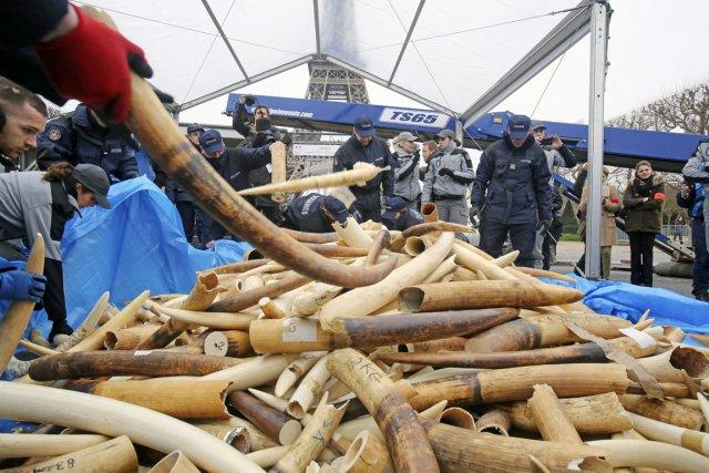 La destruction devait se dérouler publiquement en fin... (PHOTO RÉMY DE LA MAUVINIÈRE, AP)
