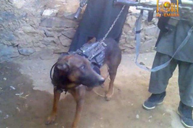 Le chien porte sur son dos un gilet... (Photo AFP)