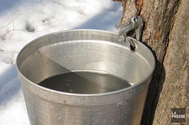 Environ un million de litres d'eau d'érable seront... (Photothèque La Presse)