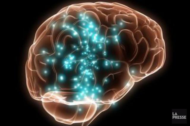 Une étude sur les singes a permis de repérer comment s'élabore dans le cerveau... (Photothèque La Presse)