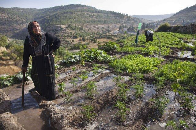 Le village de Battir est célèbre pour ses... (Photo: AFP)