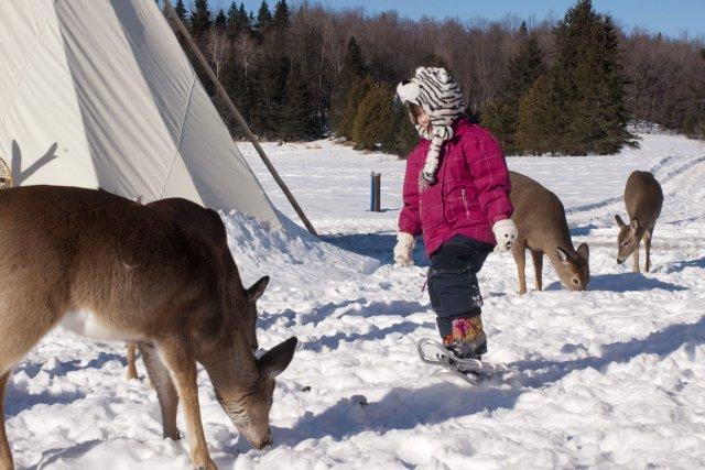 Sur fond de neige, les animaux se laissent... (Photo Paul Simon, fournie par Parc Oméga)