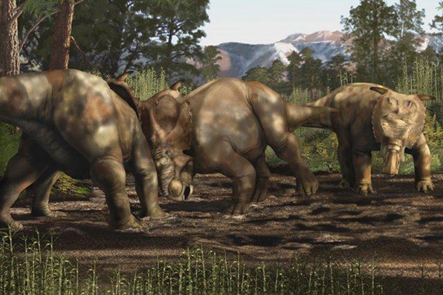Image reconstituant un combat entre plusieurspachyrhinosaures.... (Image Karen Carr / Wikipedia)