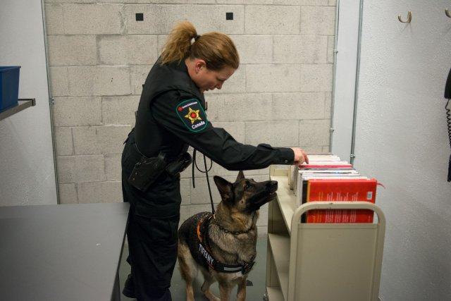 Le chien renifleur dans la prison de Lietteville... (Photo fournie par ICI Radio-Canada Télé)