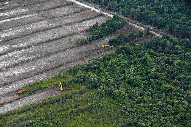 La moitié des forêts indonésiennes ont disparu en... (Photo BAY ISMOYO, AFP)