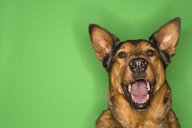Lorsqu'une plainte est déposée, un dossier est ouvert... (PHOTO DIGITAL VISION/THINKSTOCK)