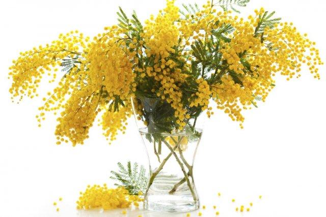 L'odeur capiteuse du mimosa, tombée en désuétude depuis... (Photo Digital/Thinkstock)