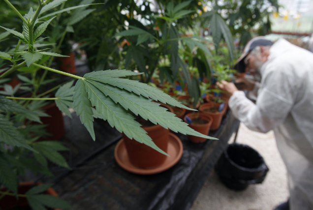 Le sujet de la légalisation ou non de... (Photo BAZ RATNER, Reuters)