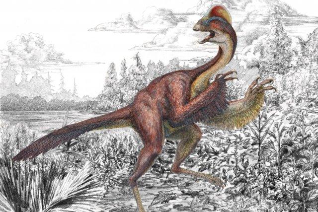Des paléontologues américains sont parvenus à reconstituer une espèce de... (Photo Mark Klingler, AP)