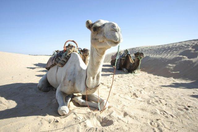 Le pays espère accueillir 7 millions de touristes... (Photo Digital/Thinkstock)