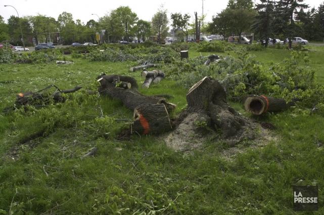 En 2003, plusieurs arbres ont dû être abattus... (photo Denis Courville, archives La Presse)