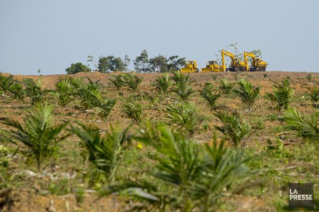 Des grues et des bulldozers sont utilisés dans... (Photo David Boily, La Presse)