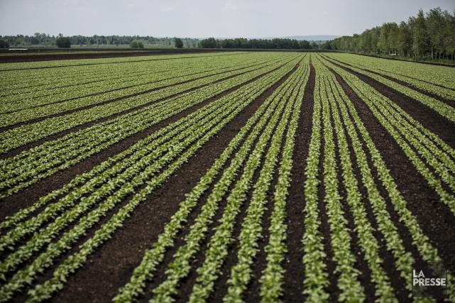 Le prix des terres québécoises ainsi que le... (PHOTO OLIVIER PONTBRIAND Archives LA PRESSE)