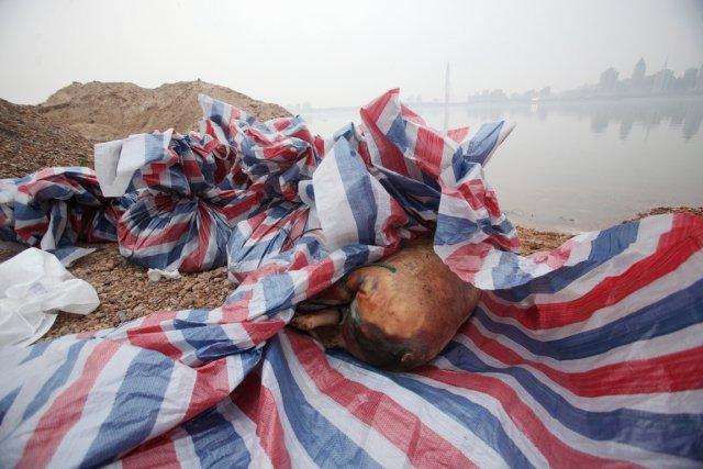 Il y a quelques jours, 157 cochons décédés... (PHOTO AFP)