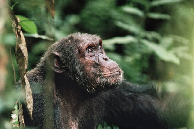 Le parc national des Virunga abrite une biodiversité exceptionnelle.... (PHOTO WWF)