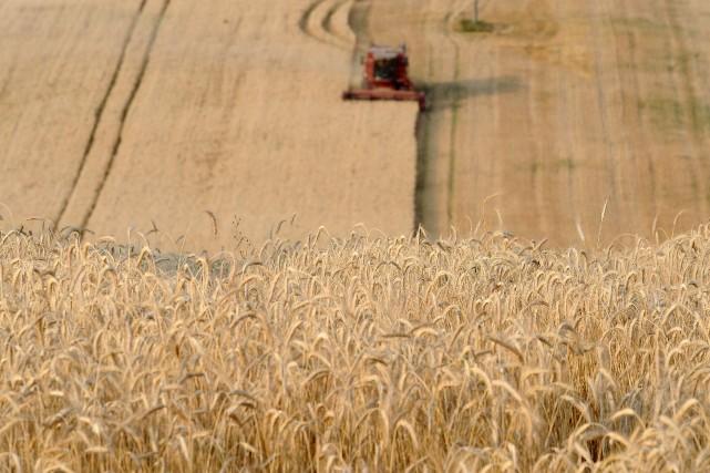 Les niveaux de stock dans les fermes sont... (Photo REMY GABALDA, AFP)