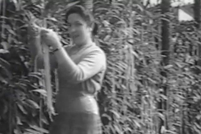 Le 1er avril 1957, Panorama, émission d'affaires publiques... (IMAGE ARCHIVES BBC)