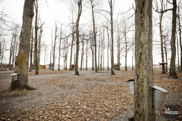 La production de sirop d'érable perdra son aspect... (Photo Ninon Pednault, archives La Presse)