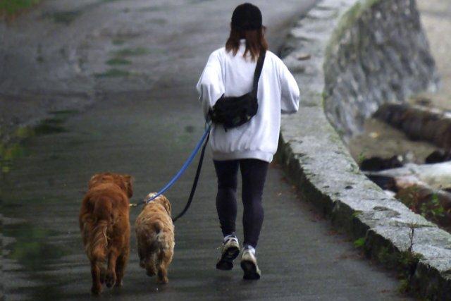 Outrée par les crottes de chiens qui maculent ses trottoirs, une mairie... (Photo archives PC)