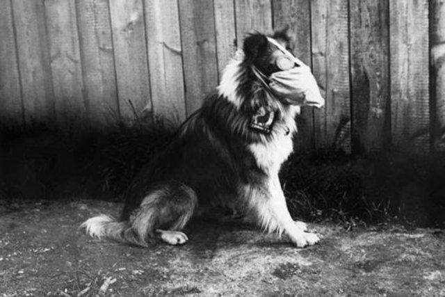 Un chien de l'armée britannique, en 1916.... (PHOTO DAMON CLEARY/CNRS 2013)