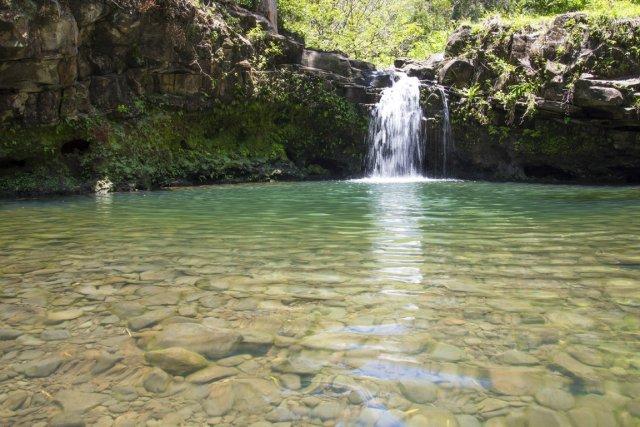 Maui se démarque tout autant par une flore... (Photo fournie par Hike Maui)