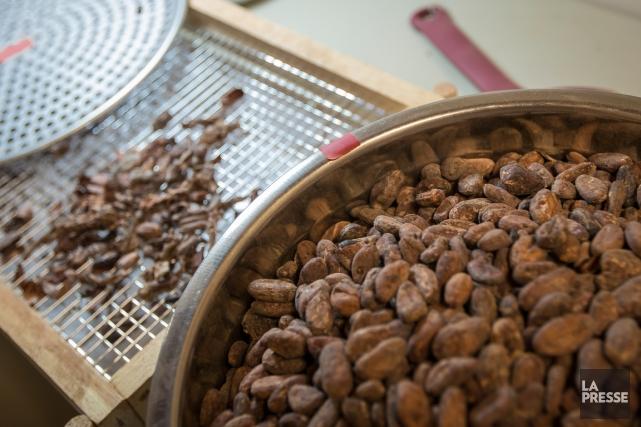 Des fèves de cacao avant d'être torréfiées.... (PHOTO OLIVIER PONTBRIAND, LA PRESSE)