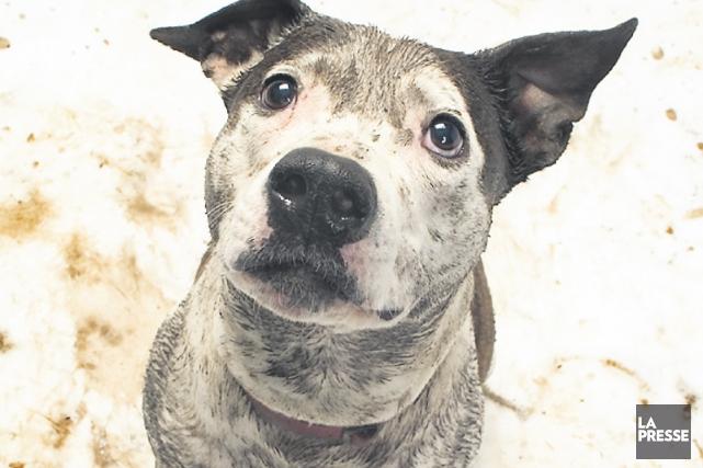 Les chiens errants qui seront capturés recevront des... (PHOTO MASTERFILE)