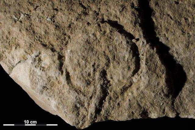 En 2012, des paléontologues américains ont annoncé qu'une... (Photo fournie par PNAS, NYU)