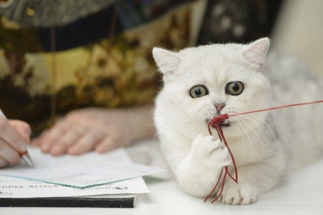 Les députés francais ont reconnu mardi soir aux animaux la qualité symbolique... (Photo Andreea Alexandru, archives AP)
