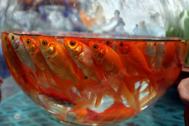 Probleme poisson rouge for Prix poisson aquarium