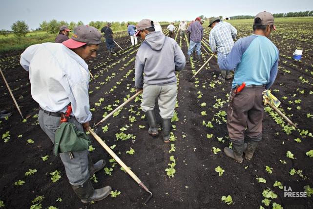 Uneprocédure de rapatriement des travailleurs agricoles en cas... (PHOTO PATRICK SANFAÇON, ARCHIVES LA PRESSE)