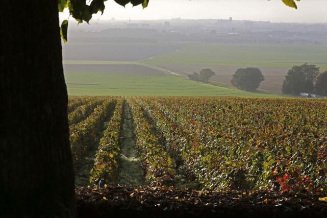 Des vignobles en Champagne.... (PHOTO ARCHIVES ASSOCIATED PRESS)