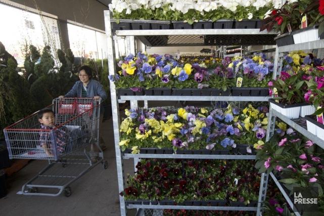 Les jardineries des magasins Costco, comme celle-ci, ont... (Photo: Robert Skinner, La Presse)