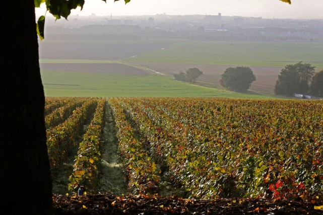 Les vignes de Veuve Clicquot Ponsardin à Saint... (Photo archives AP)