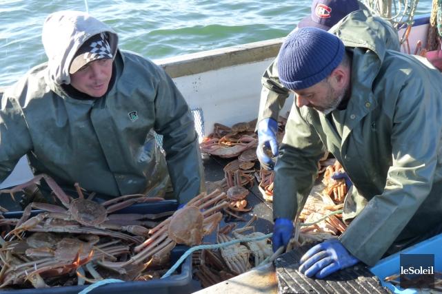 Les prises de crabe des neiges à l'Île-du-Prince-Édouard sont en forte baisse... (Photo archives Le Soleil)