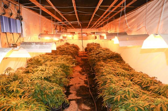 Le projet d 39 enqu te moisson vu de l 39 int rieur matthieu for Cannabis interieur