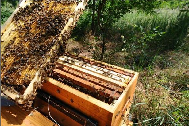 Un rayon sorti d'une ruche.... (Photo archives AFP)