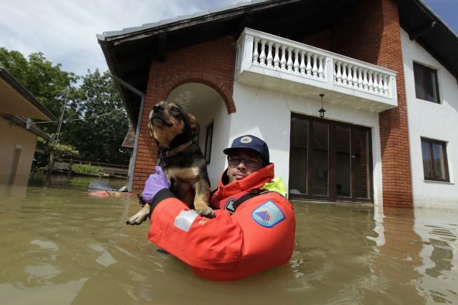 Des vétérinaires ont constitué des équipes chargées de... (Photo SRDJAN ZIVULOVIC, Reuters)