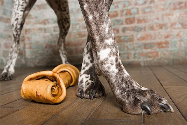 L'ostéoarthrose touche approximativement 20% des chiens de plus... (PHOTO MASTERFILES)