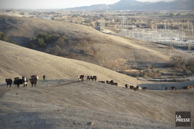 Les sécheresses aux États-Unis, comme celle dans la... (PHOTO NINON PEDNAULT, ARCHIVES LA PRESSE)