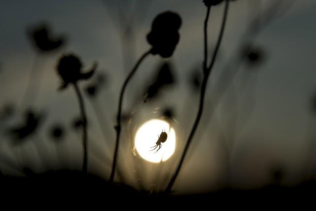 Depuis quinze ans, le nombre d'essaims disparaît sur... (Photo LUKAS BARTH, Reuters)