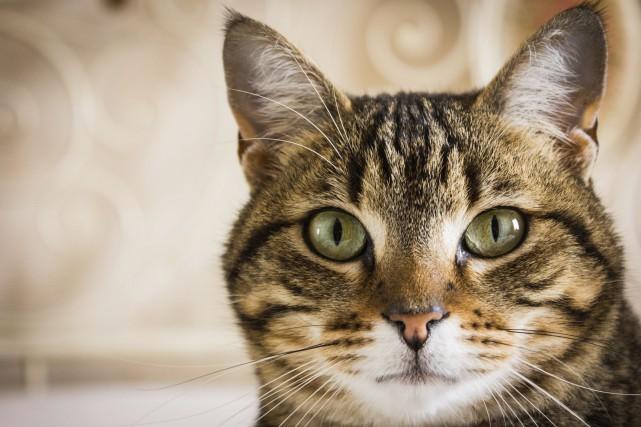 Une chatte, dont la propriétaire avait perdu la trace il y a pratiquement six... (Photo Digital/Thinkstock)