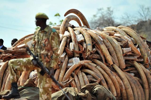 De 480 à 900 éléphants ont été tués... (PHOTO TONY KARUMBA, ARCHIVES AFP)