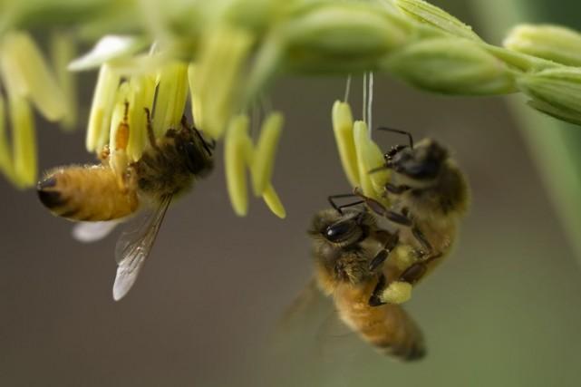 Des scientifiques soutiennent que l'usage répandu de deux types de pesticides... (Photo Sherjaca/shutterstock.com)