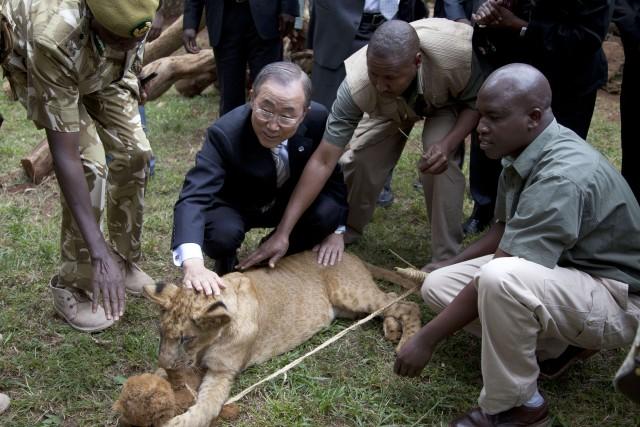 Ban Ki-moon a baptisé son lionceau Tumaini, ce... (PHOTO SAYYID AZIM, AFP)