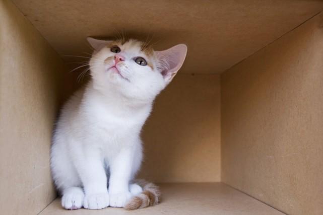 Un déménagement d'appartement donne souvent lieu à l'abandon... (PHOTO MASTERFILE)