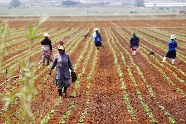 L'Afrique du Sud sur les traces du Zimbabwe ?